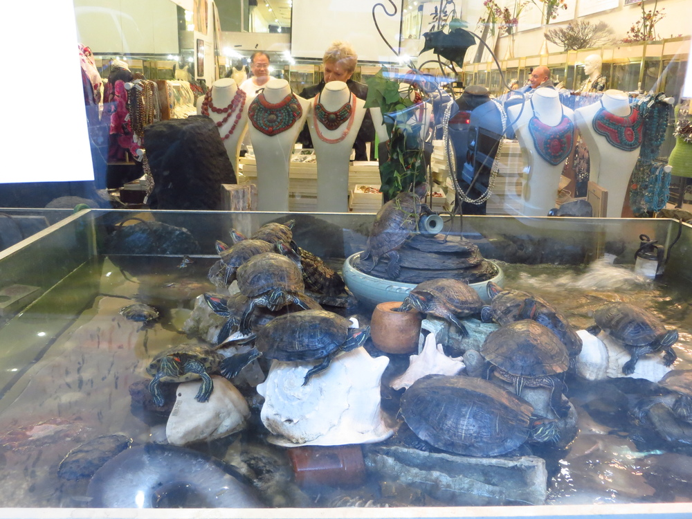 There's a cool story behind the turtles at this pearl store