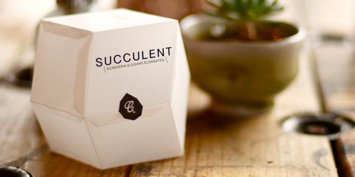 02 28 13 succulent 1