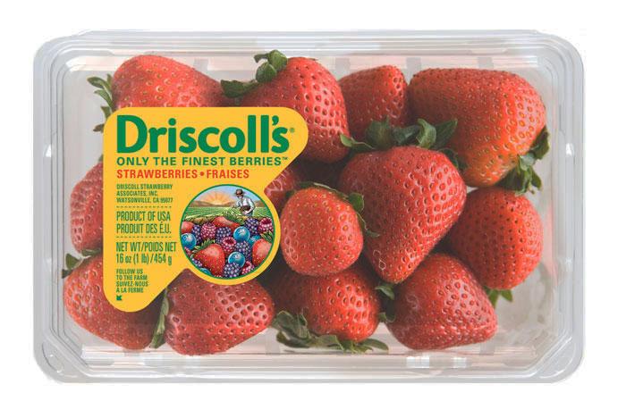 02 15 13 driscolls 5