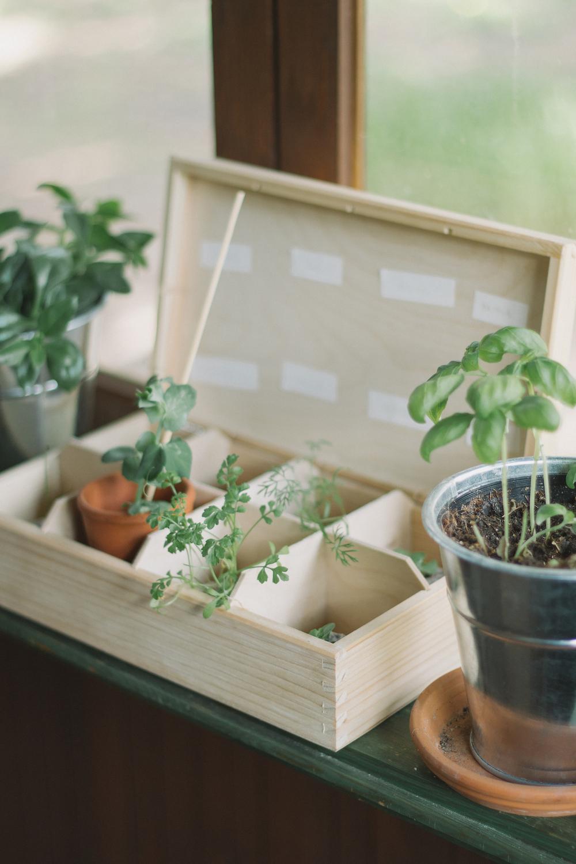 Thisispaper_Gardening_6.jpg