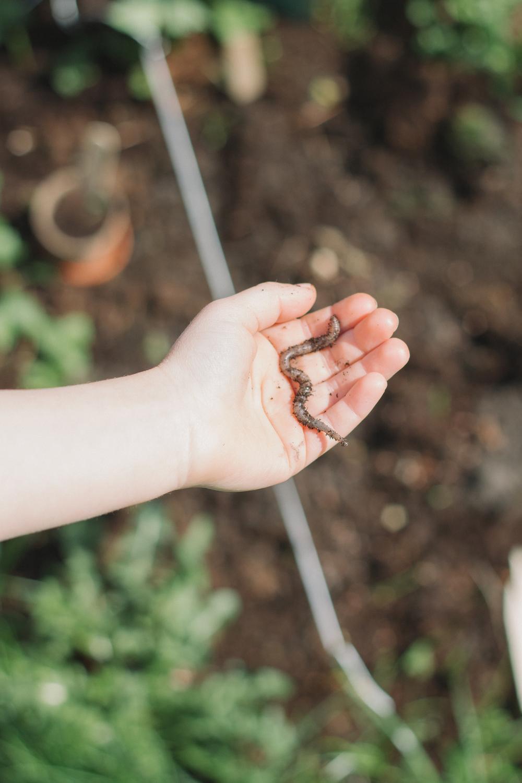 Thisispaper_Gardening_16.jpg