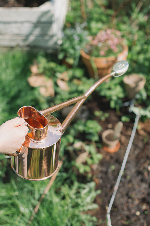 Thisispaper_Gardening_18.jpg