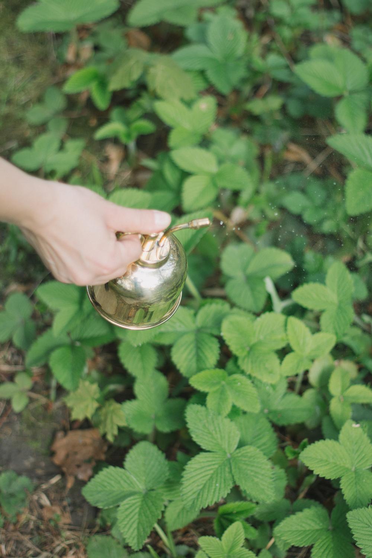 Thisispaper_Gardening_37.jpg