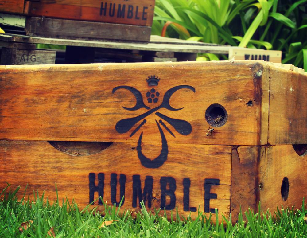 Humble_Soda_6.jpg