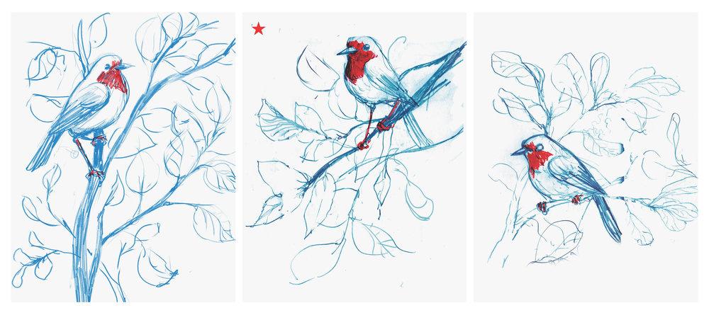 RougeGorge-Sketch-1.jpg