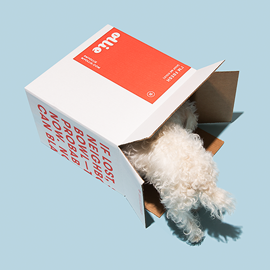 another dog in box.png