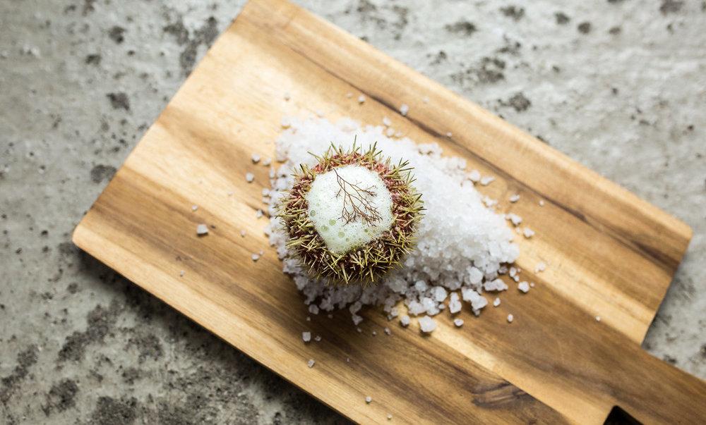 Lofoten-Seaweed-22.jpg