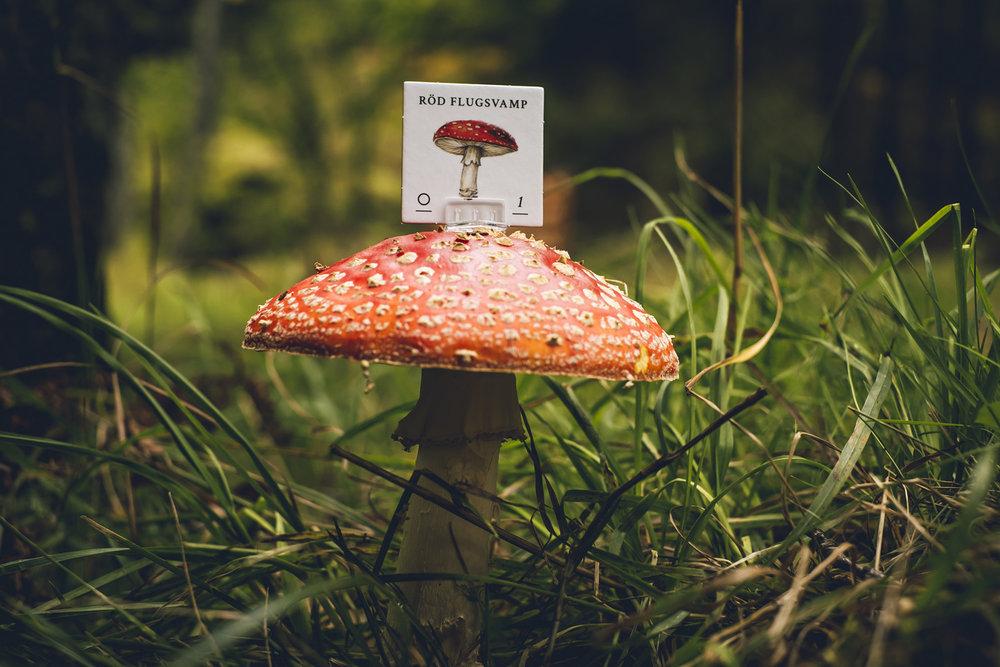 Skogen-6131.jpg