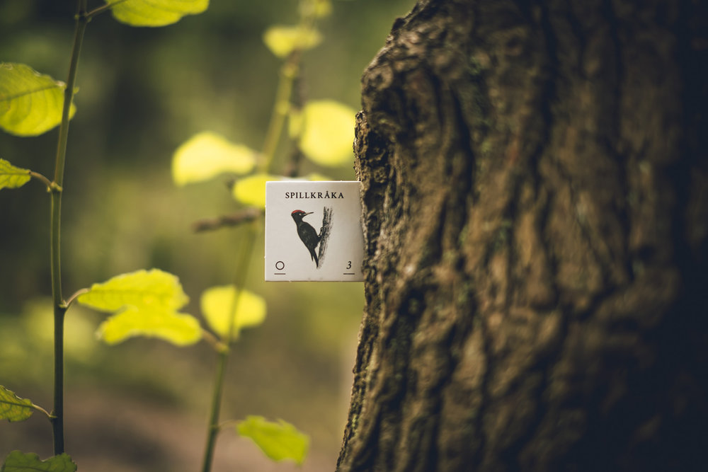 Skogen-6141.jpg