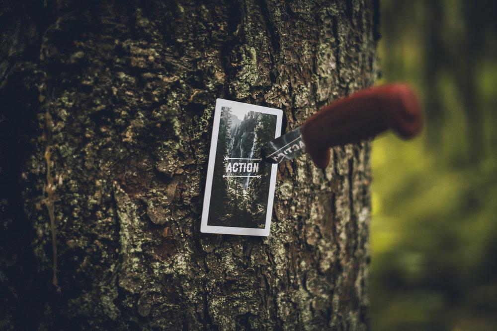 Skogen-6367.jpg