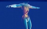 human-digestive-system-163714_640 2_thumb.jpg