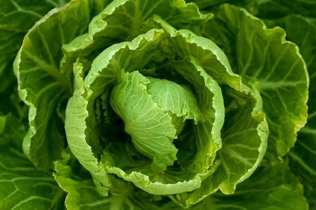 leafy-green-vegetables-lettuce-global-health-renegade.jpg