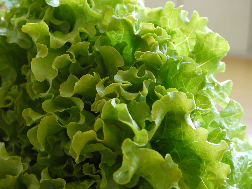 leafy-green-vegetables-oak-lettuce-global-health-renegade.jpg