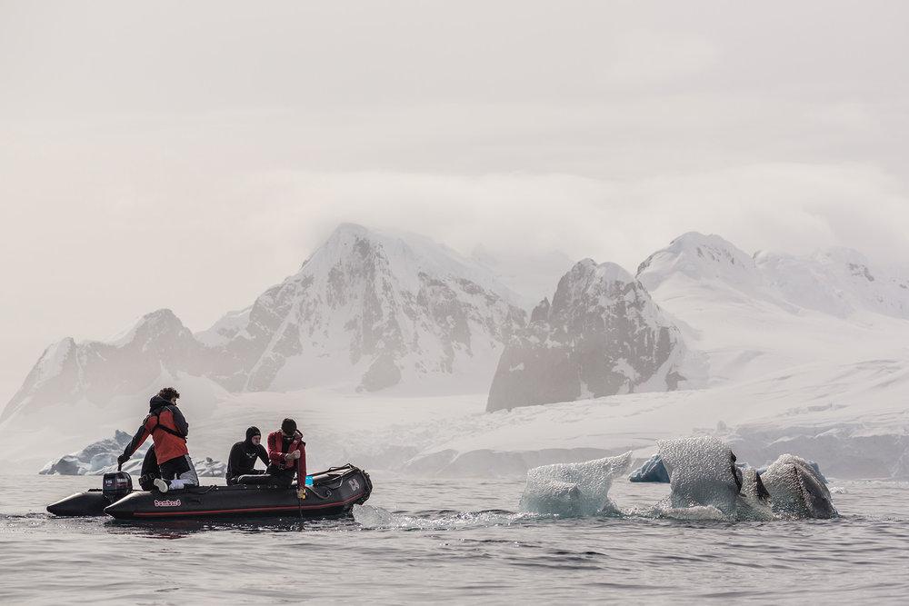 Joseph Michael Diving in Antarctica_1920.jpg