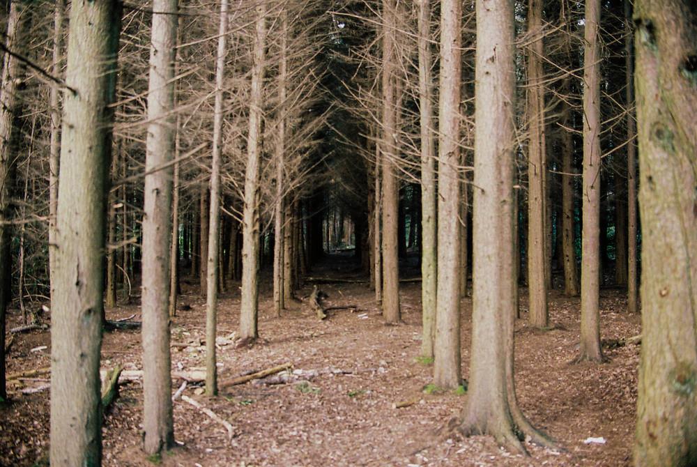 Stover Woods, Devon - 2015