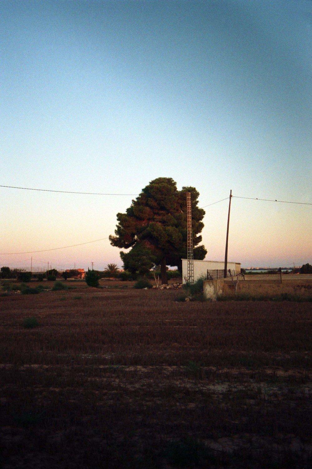September 2017 (Kodak Colour Plus) 8.jpg