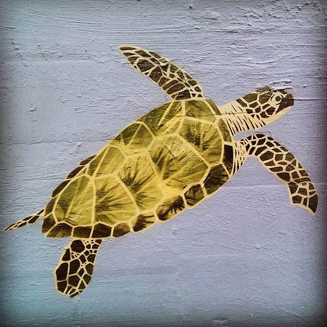 Another turtle on the wall.