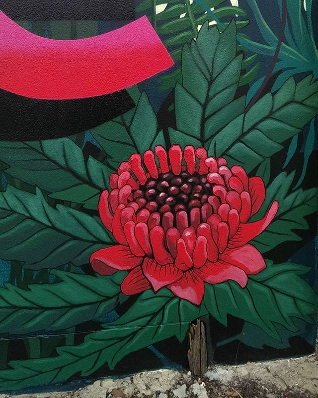 @betni painted this beautiful waratah in the corner of the wall.