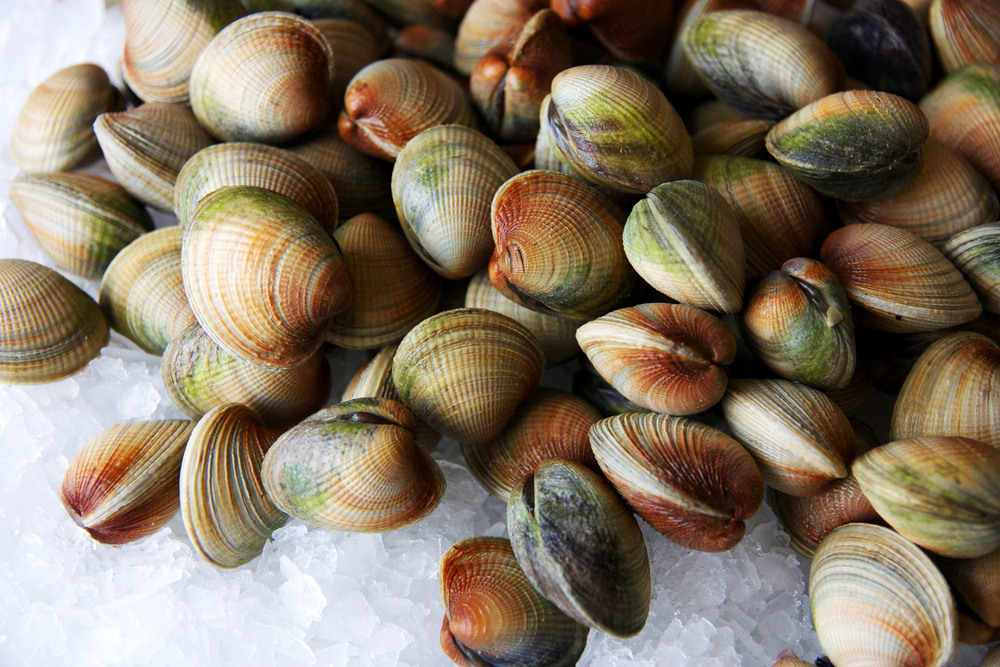 Pangea Shellfish Cockles.jpg