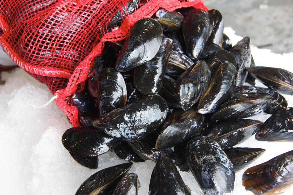 Pangea Shellfish Hollander Mussels.jpg