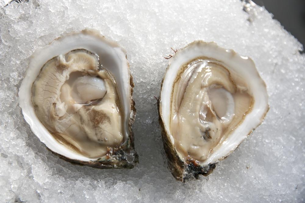 Pangea Shellfish Washburn Island 2