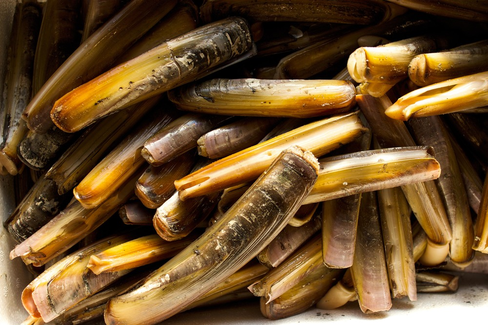 Pangea Shellfish Razor Clams
