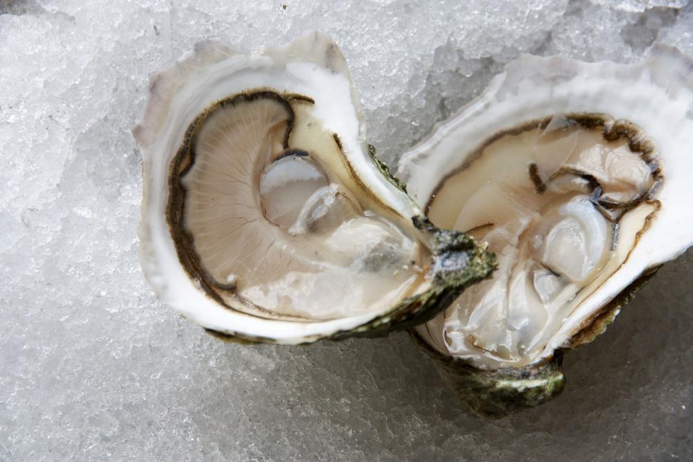 Pangea Shellfish Cultured Onset.jpg