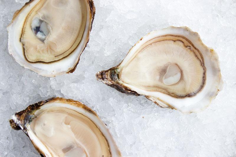 Daisy Bay Oysters