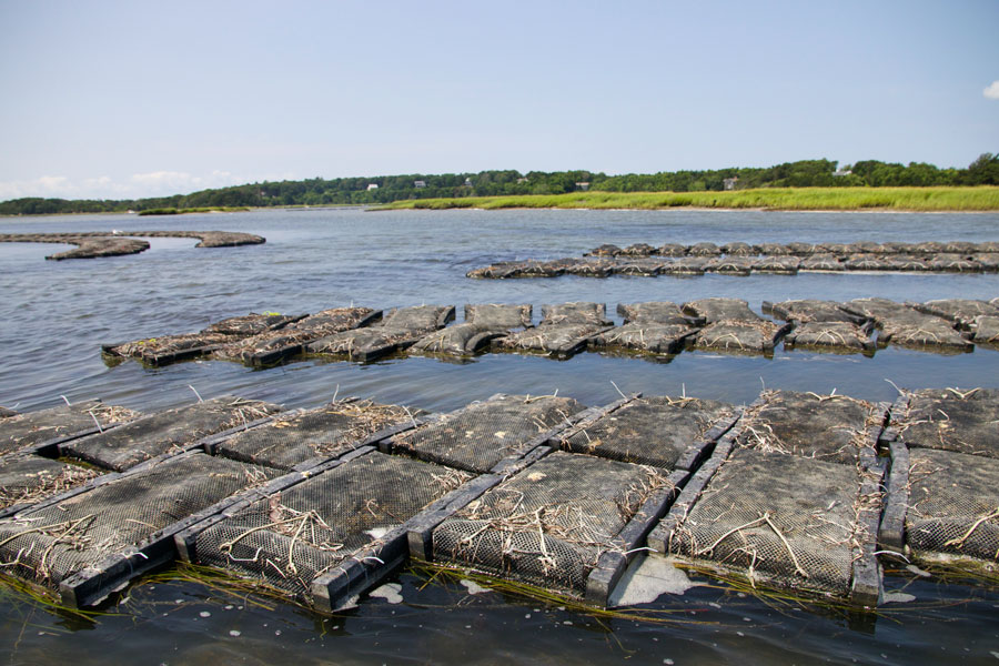 pleasant-bay-oyster-farm-2.jpg