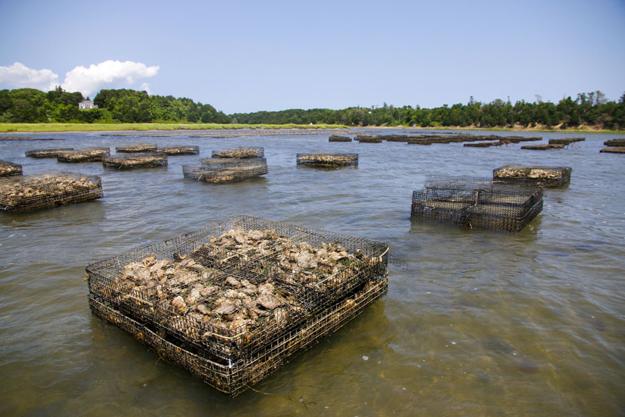 pleasant-bay-oyster-farm.jpg
