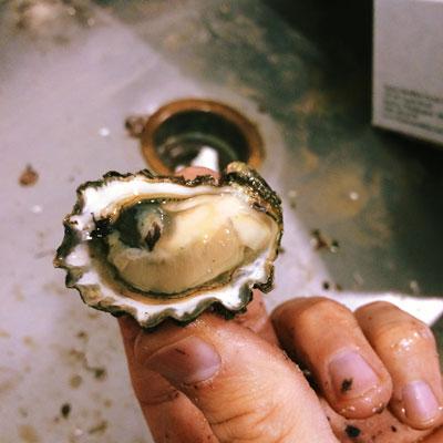 wa kumamoto oyster