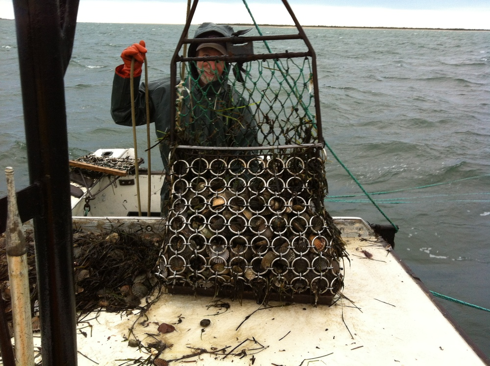 bay-scallop-dredge.jpg