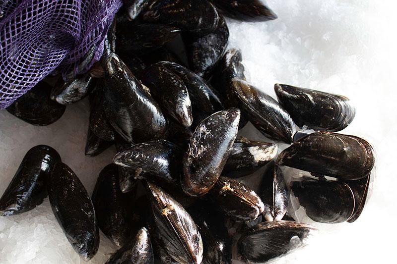 wild cape bay mussels.jpg