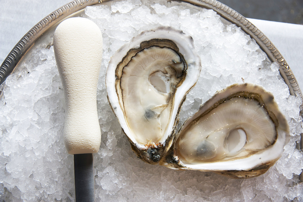 Pangea Shellfish Pemaquid Oyster.jpg