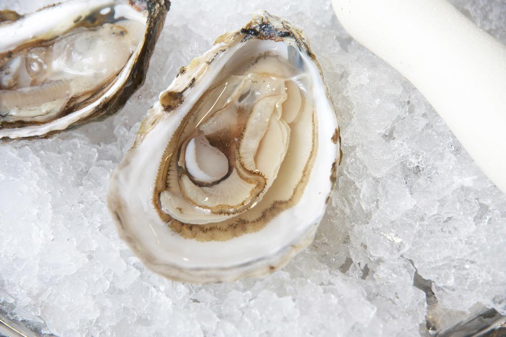 Pangea Shellfish Riptide Oyster.jpg