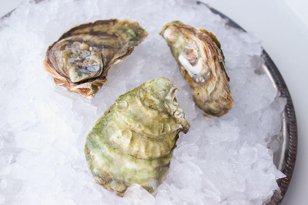 Malpeque-Oyster-Pangea-Shellfish-2.jpg