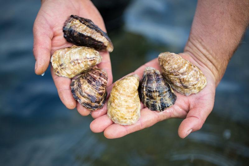 capital-oysters.jpg