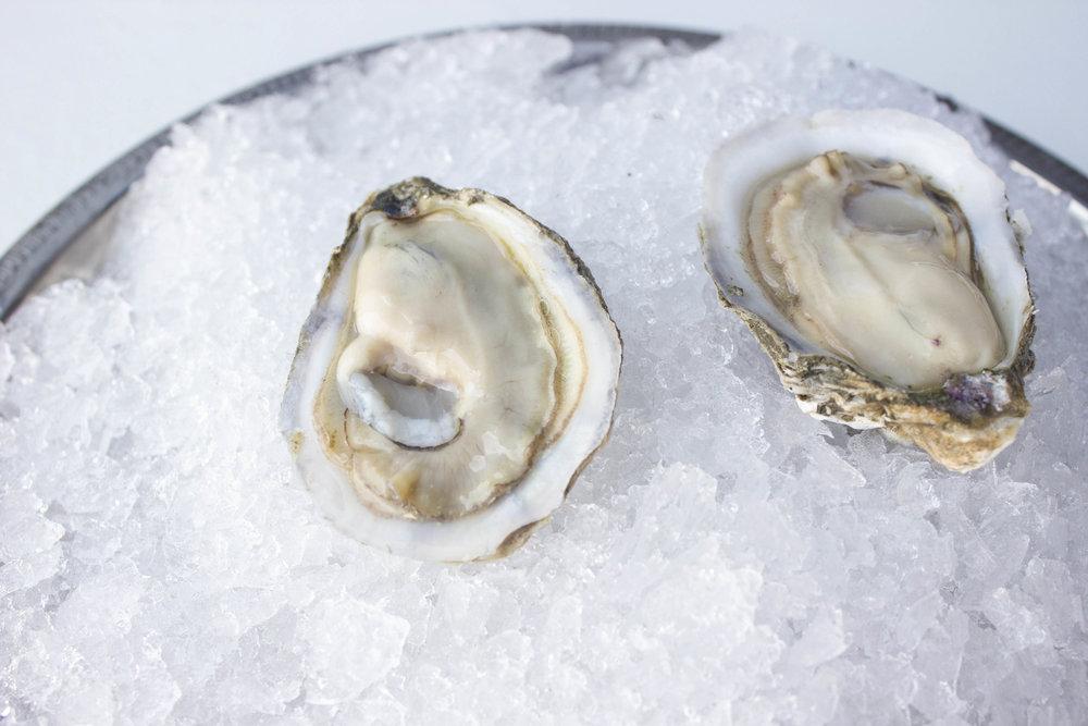 Chesapeake Open 2 Pangea Shellfish.jpg