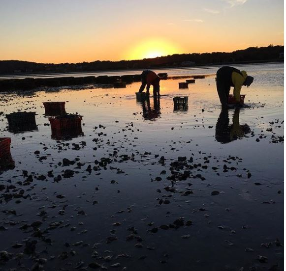 Late summer at Standish Shore oyster farm in Duxbury, MA