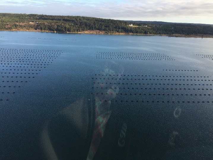 One of the many leases owned by Bill and Stanley Oyster Co on Nova Scotia. These are floating OysterGro® cages that will soon be sunk for winter. (Excuse the reflection in the window!)