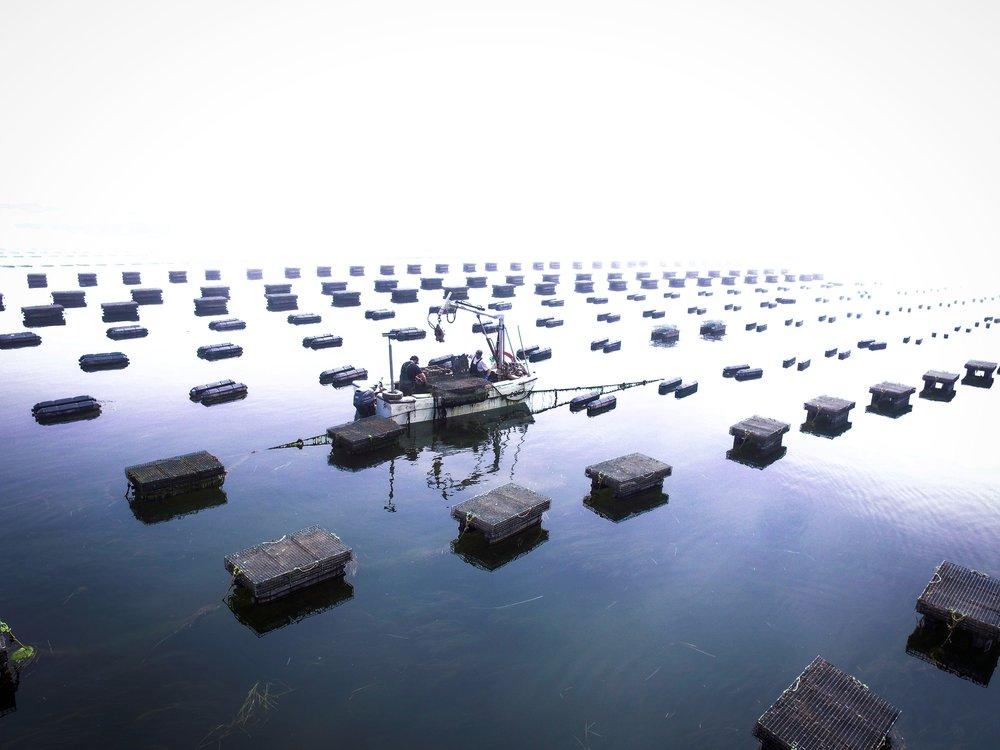 Savage Harbor.jpg
