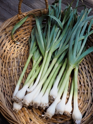 look for Green garlic at our local farmers market. Choose bunches that have tender bulbs and firm stalks