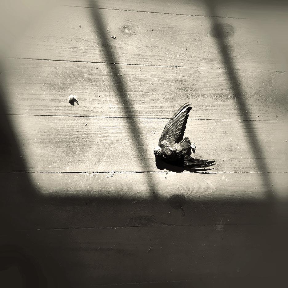 birdlr.jpg