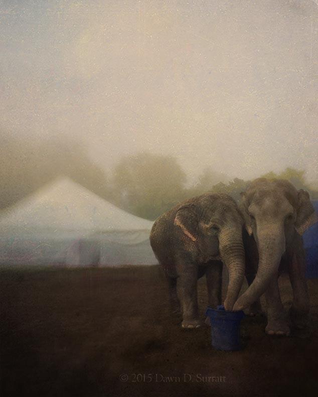 elephantsbestlr.jpg