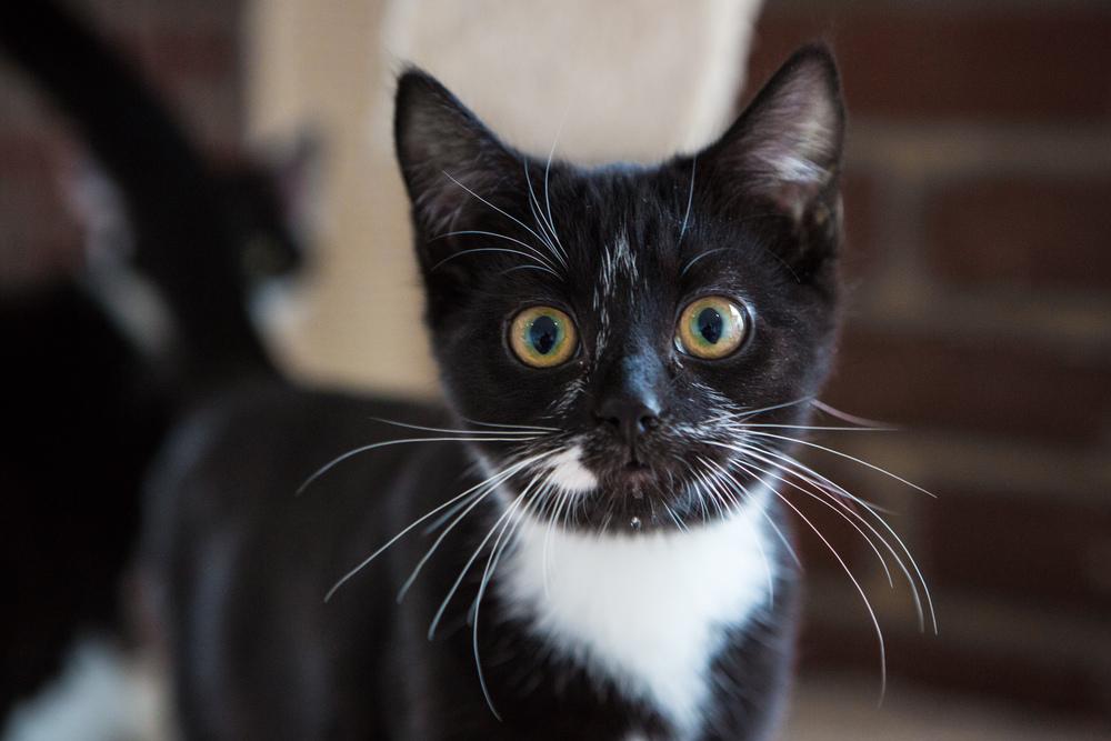 KW_Cats1_011.jpg