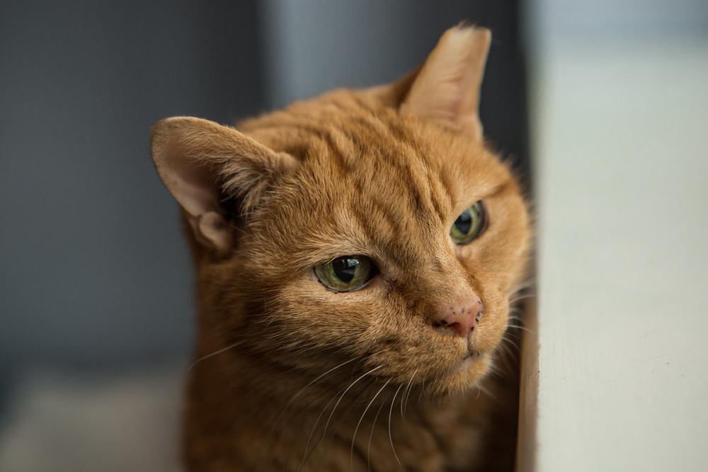 KW_Cats1_005.jpg