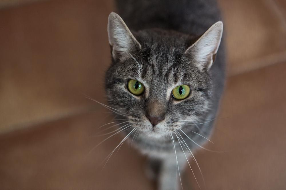 KW_Cats1_014.jpg