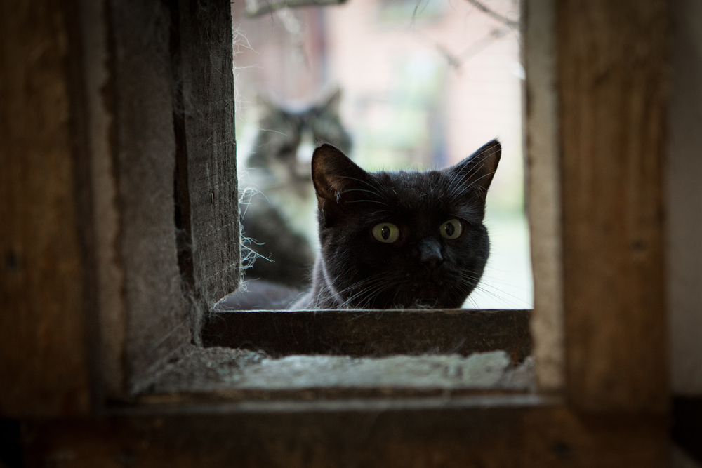 KW_Cats1_021.jpg