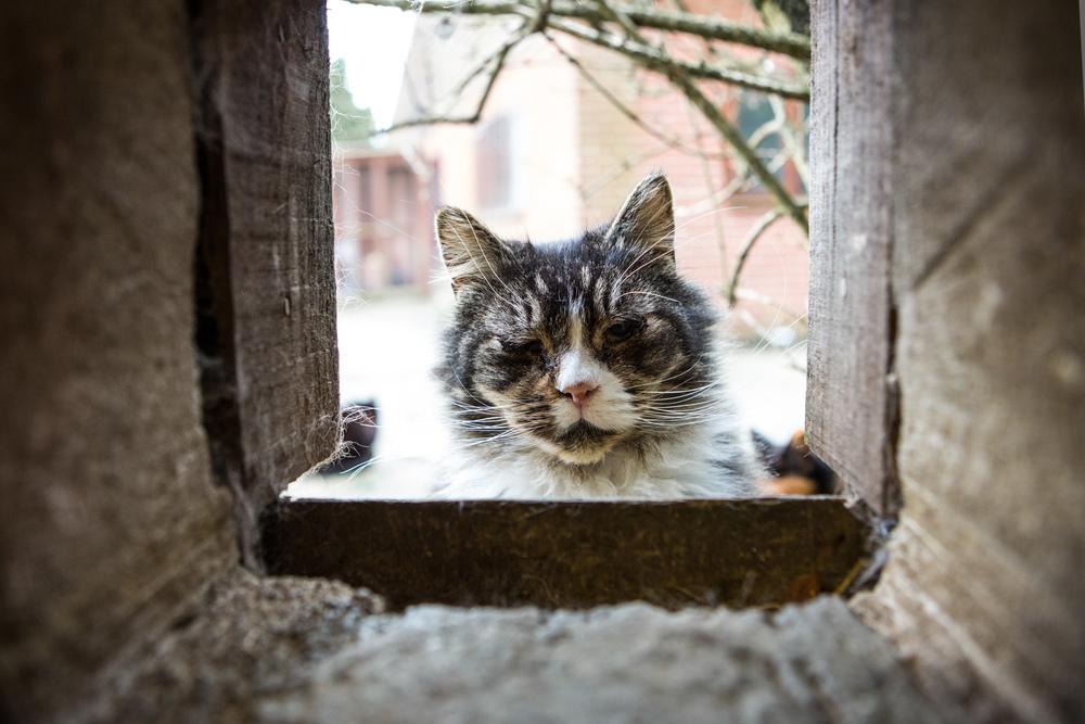 KW_Cats1_022.jpg
