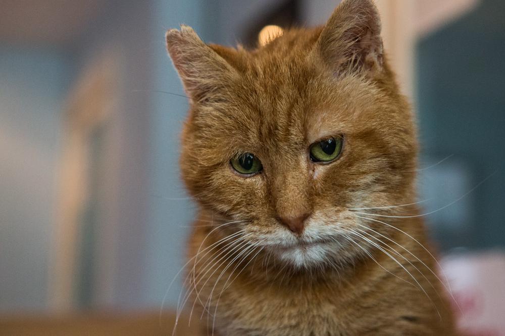 KW_Cats1_035.jpg